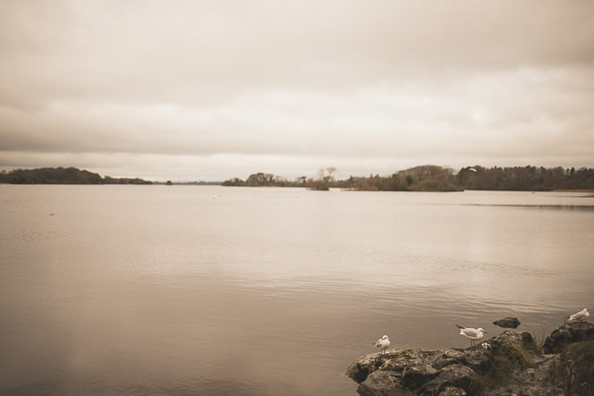 Natural Photography ~ Killarney Walk